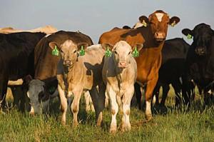 Животноводство – важная отрасль экономики страны