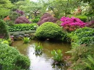 Зеленые растения на службе человеку