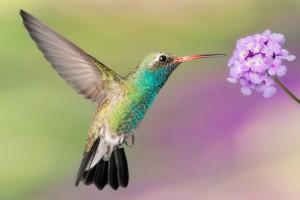 Самая уникальная птица в Мире