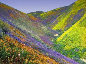 «Долина цветов»