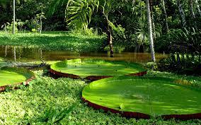 Река Амазонка мифы и реальность
