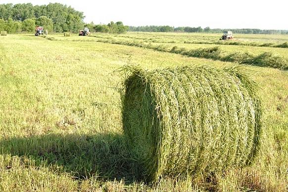 После «Brexit», Великобритания должна будет самостоятельно поддерживать своих фермеров