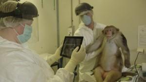 Ученые Великобритании потребовали прекратить проведение опытов на приматах