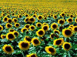 Интернет-издание «Агробізнес України»