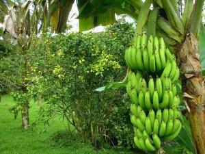 Растительный мир Африканского континента