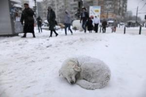 Брошенные животные и гуманное отношение