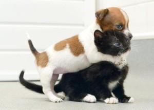 Чему учит забота о животных?
