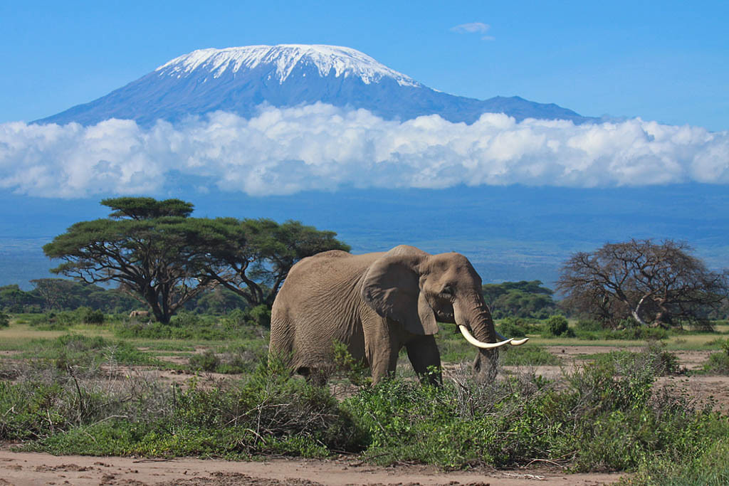 Permalink to mount kilimanjaro national park