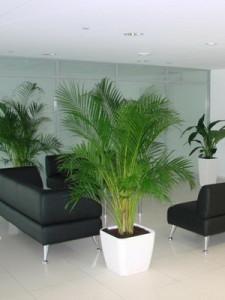 Комнатные растения в интерьере помещений
