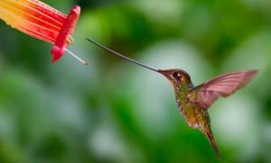 Животный мир Амазонки