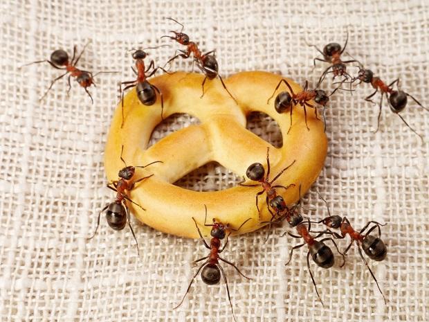 Как правильно бороться с заселением муравьев в доме?