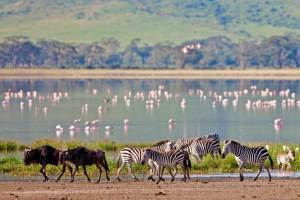 11 фактов о Танзании, которые необходимо знать!