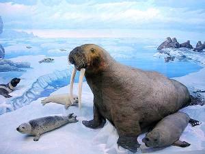 Заснеженная Арктика