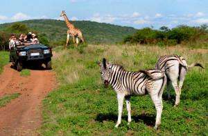 Что такое африканское сафари?