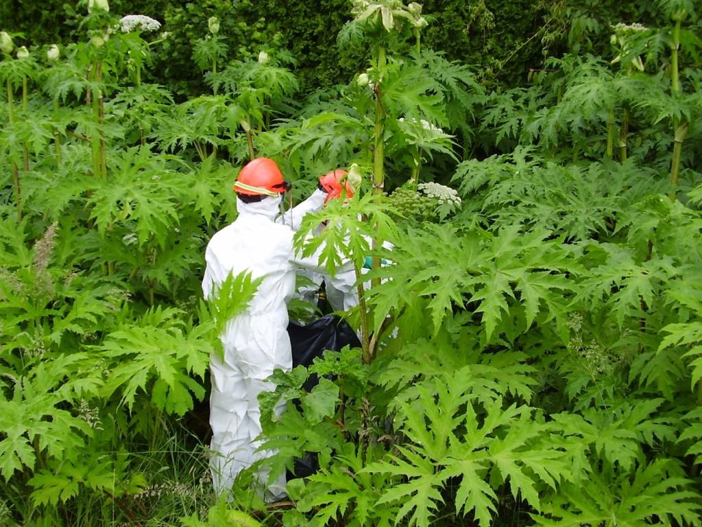 Фитонциды – удивительное свойство самозащиты растений