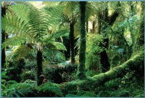 Африканские вечнозеленые леса