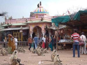 Обезьяны – опасные спутники туристов путешествующих в Индии