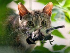Бездомные кошки Австралии ежедневно убивают боле миллиона птиц