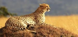 Сегодня всемирный день защиты животных