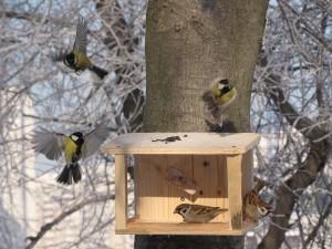 Подкормка птиц в зимний период