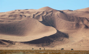 Жизнь пустыни