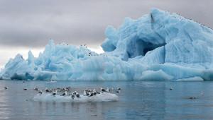 Сокращение площади вечных ледников