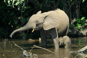 Всемирный день дикой природы