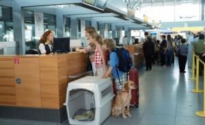 Перевозка домашних животных авиатранспортом