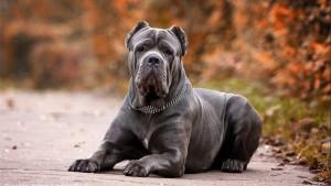 Как правильно подобрать породу собаки для содержания в доме?