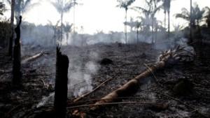 Пожары все чаще вспыхивают в тропических лесах Бразилии