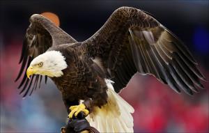 Основные меры по защите диких птиц, предлагаемые в США
