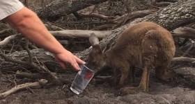 Первые практические шаги, направленные на помощь диким животным в Австралии