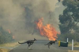 Всемирный фонд дикой природы провел свою оценку количества диких животных, погибших в пожарах в Австралии