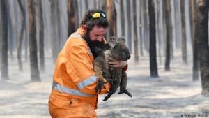 В австралийских лесных пожарах погибло более 1 миллиарда животных