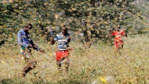 Нашествие саранчи в Кении