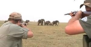 Ужасающий факт! Ботсвана проводит аукционы по выдаче лицензий на охоту на слонов после отмены запрета