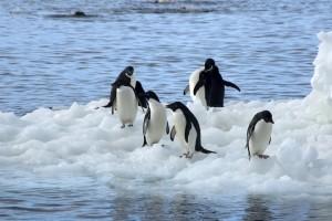 Антарктида стремительно тает