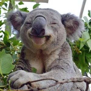 Более 113 видов животных нуждаются в «срочной» помощи после пожаров в Австралии
