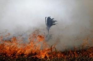 Лесные пожары в Амазонии